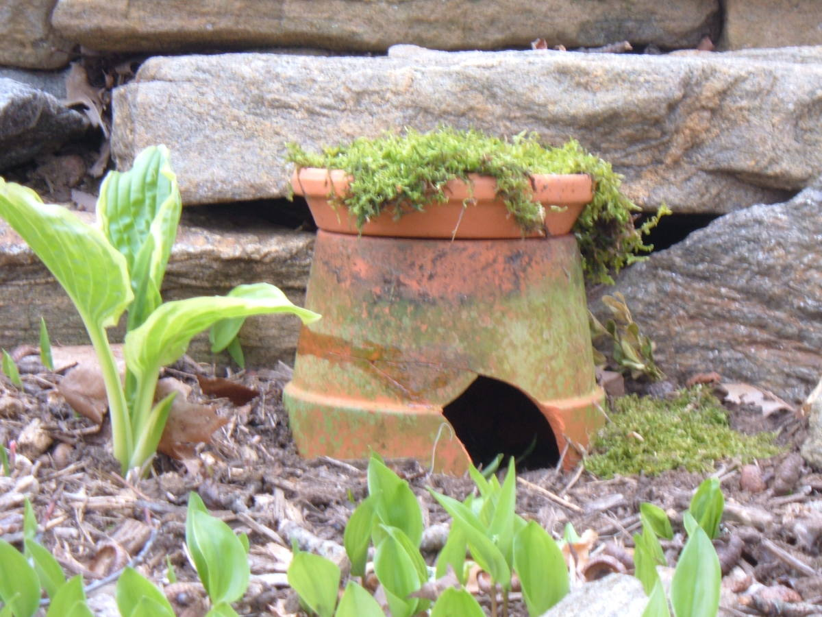 tA toad house made from an old pot.