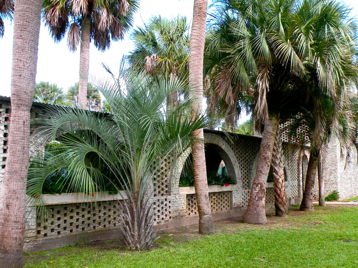 The courtyard shaded by palm trees is a popular place for weddings.