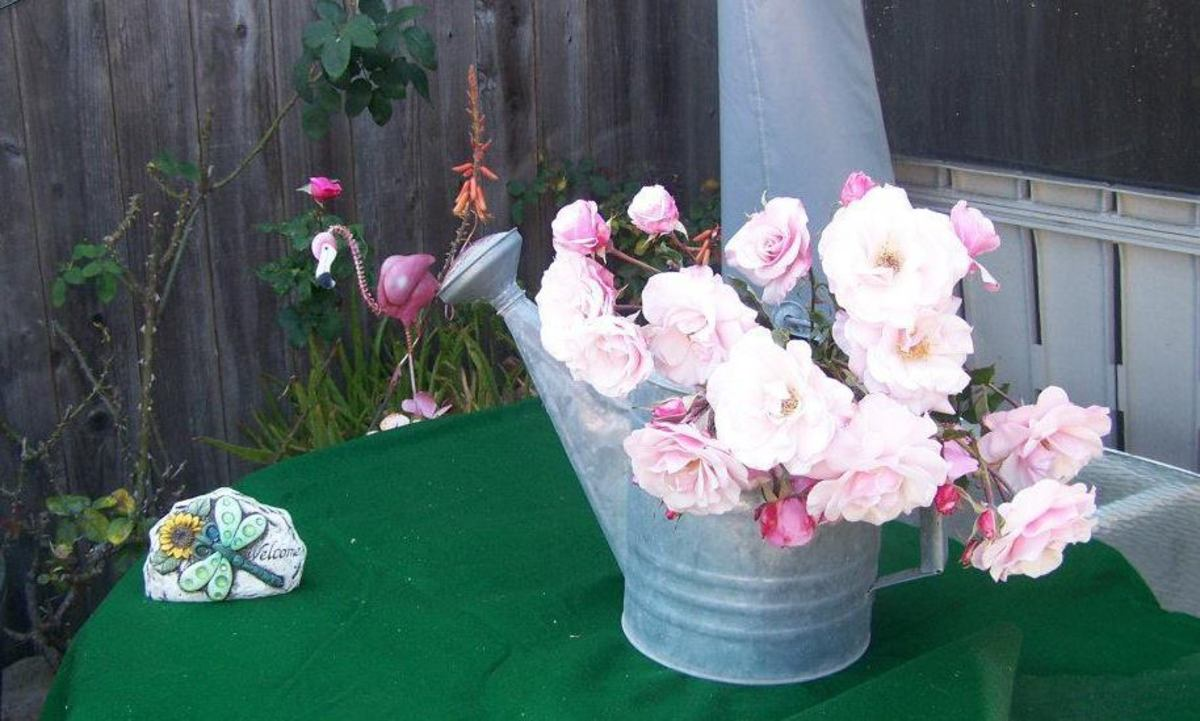 Roses in a watering can.