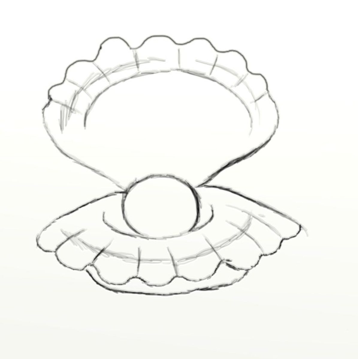 Pearl Clam Drawing