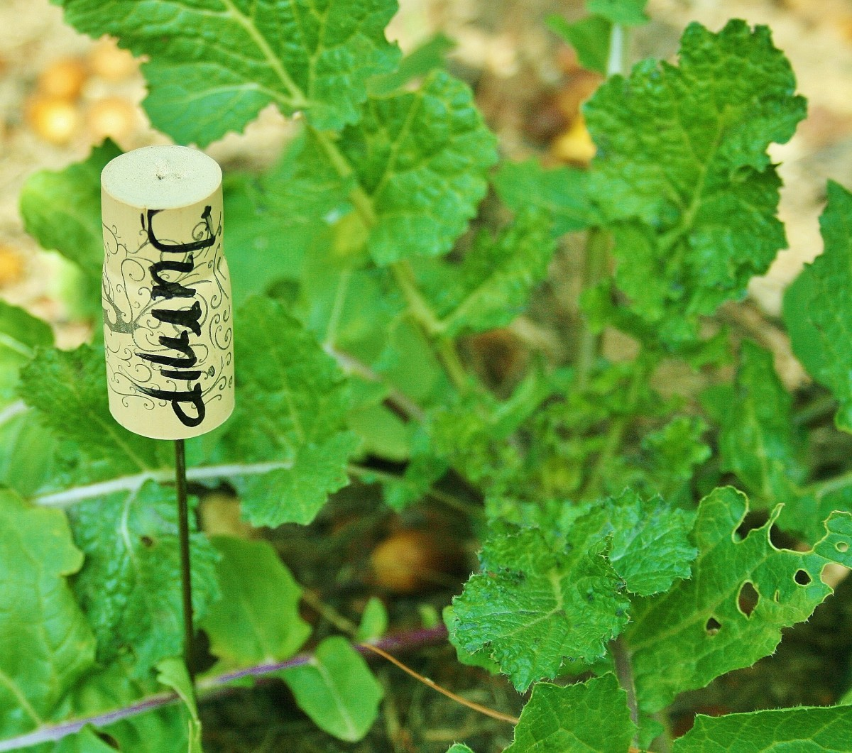 Insert a chopstick or a piece of wire coat hanger into the cork to make a plant marker.