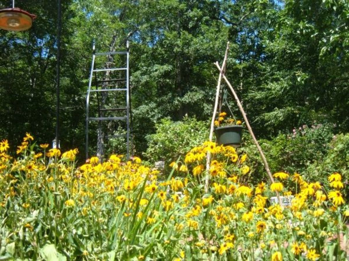 Ladybug House Garden