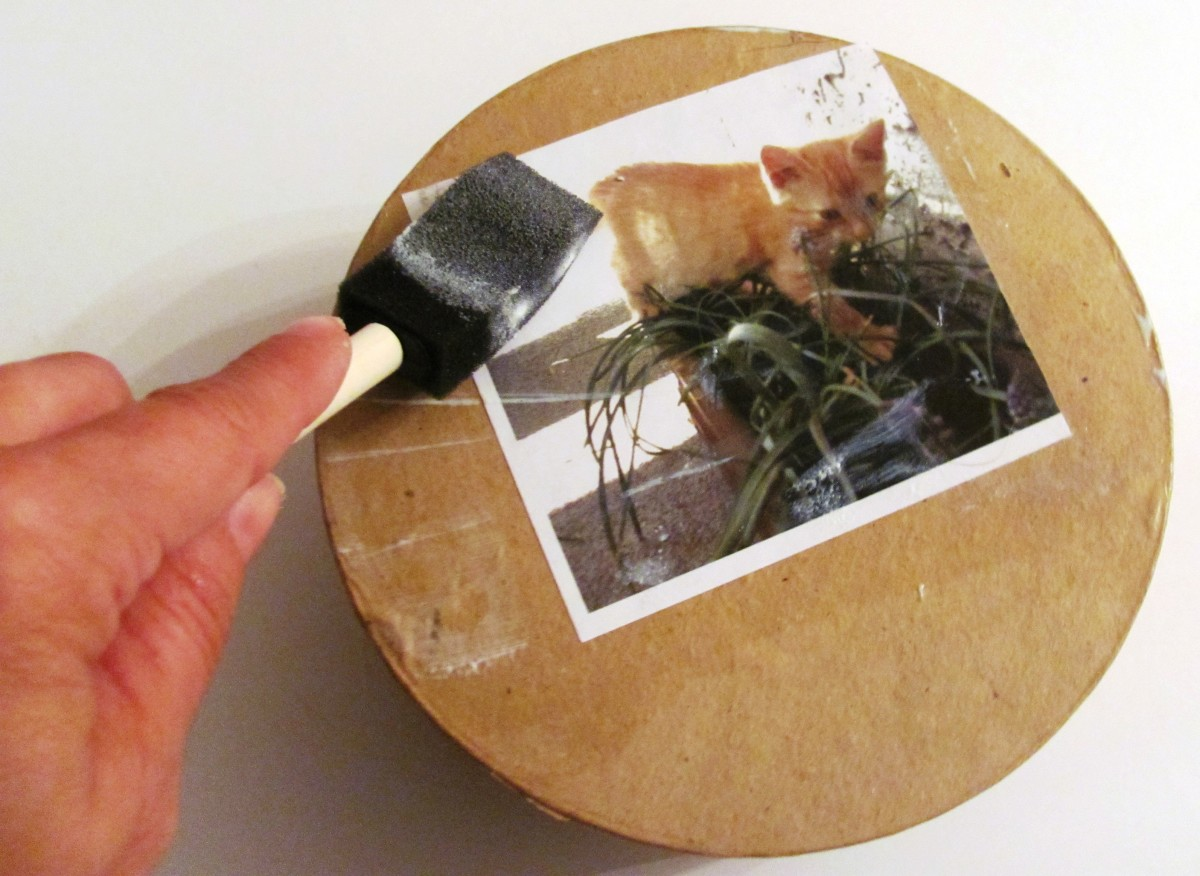 Secure each photo using ModPodge, ensuring that there are no loose edges or wrinkles.
