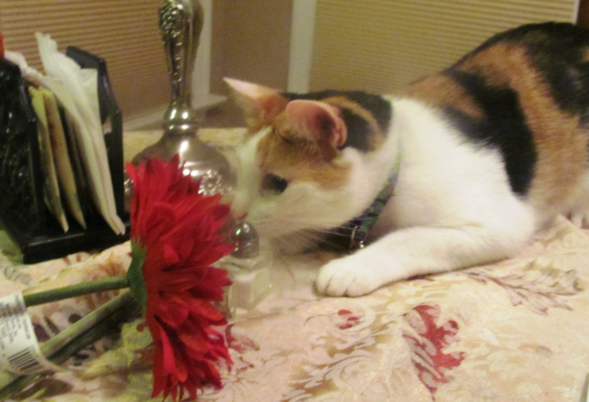 My creative consultant, Stella, has an eye for color.  She is an extremely crafty cat!