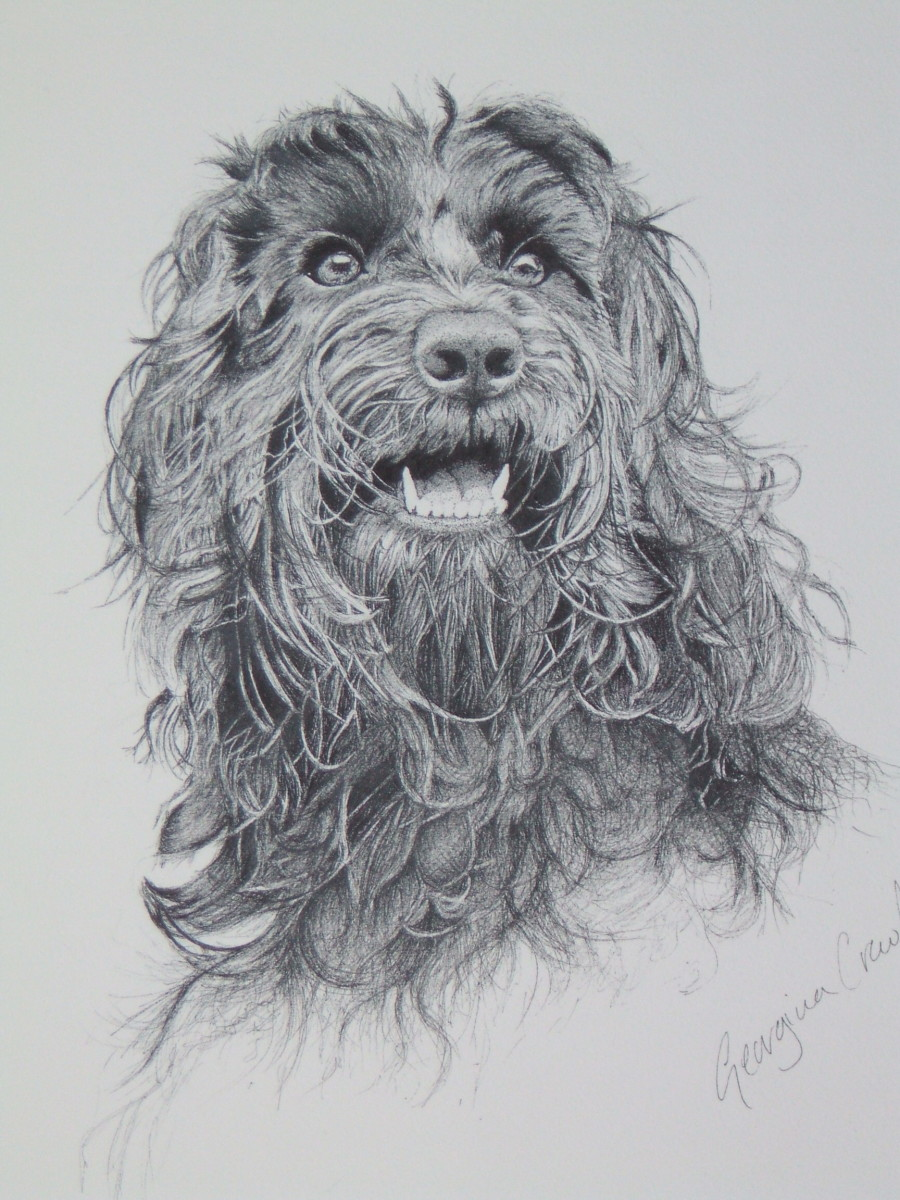I started with the eyes on this comissioned drawing of my firend's Cockerpoo.