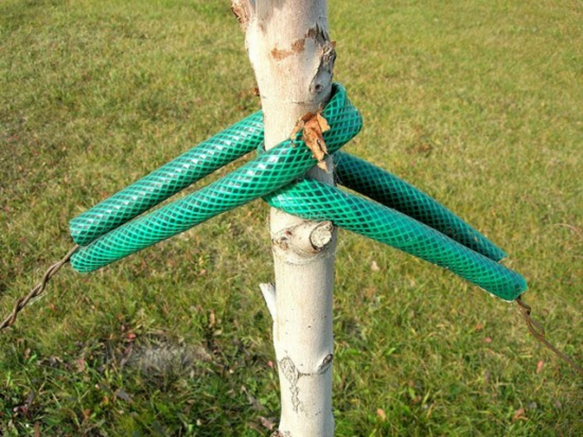 Garden hose tree support.