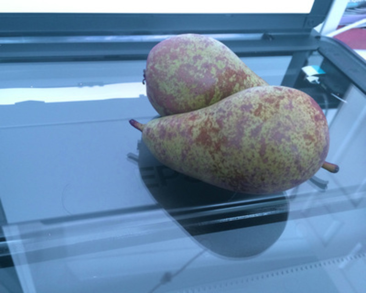 Pears on flat-bed scanner.