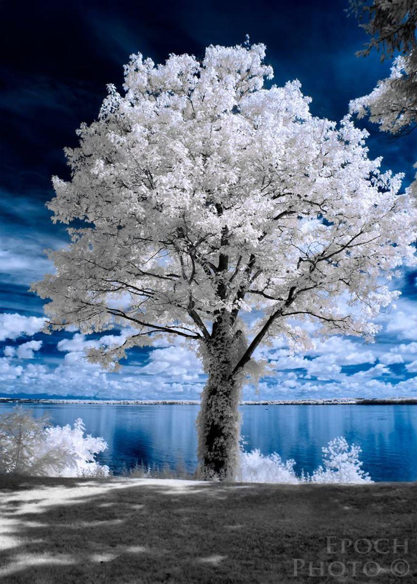 Look at this beautiful tree shot using an IR camera...love it
