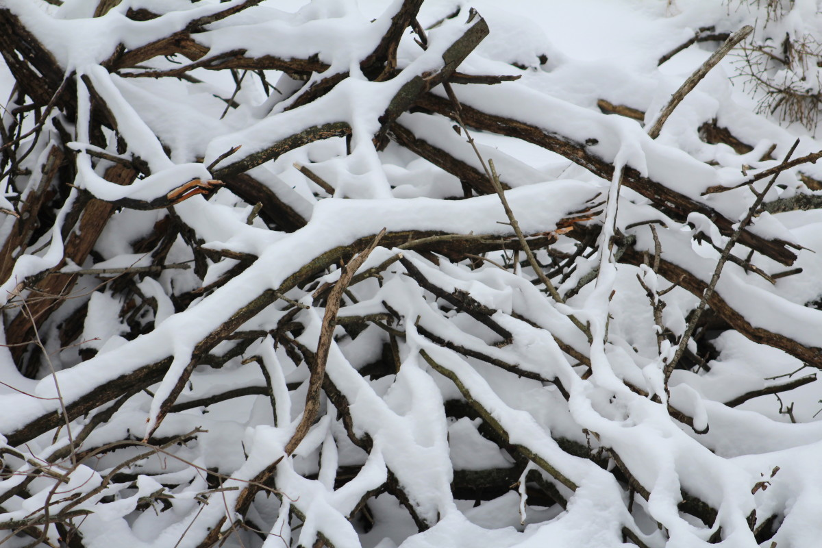 Snowy Fallen Branches Could Be A Shelter For Small Creatures