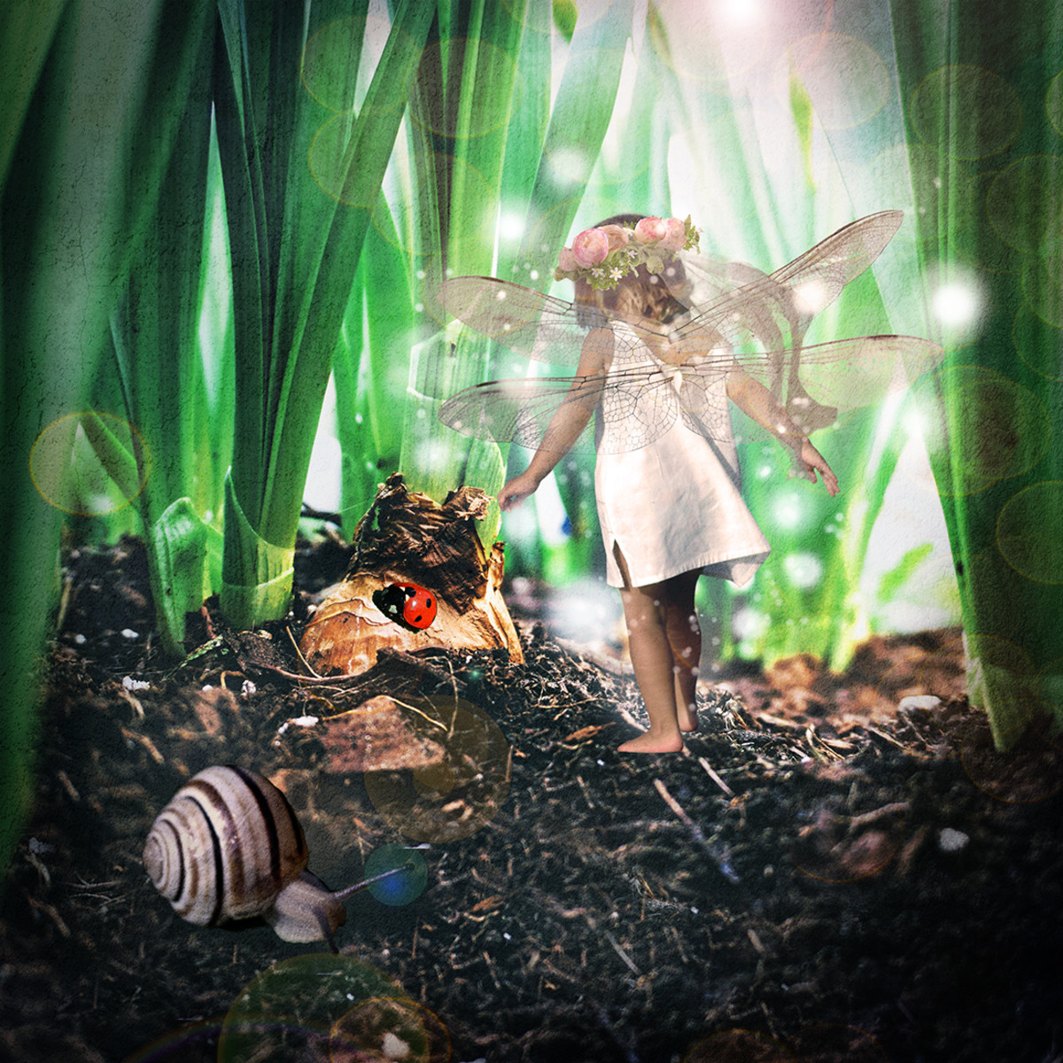 The Flower Bulb Fairy gives us great perspective with this low angle.