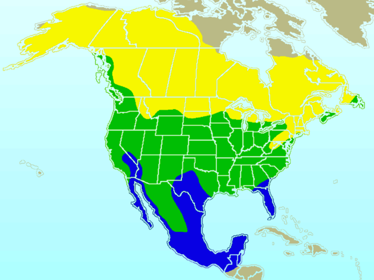 Approximate range of the American Robin (yellow = summer range, blue = winter range, green = year-round range)