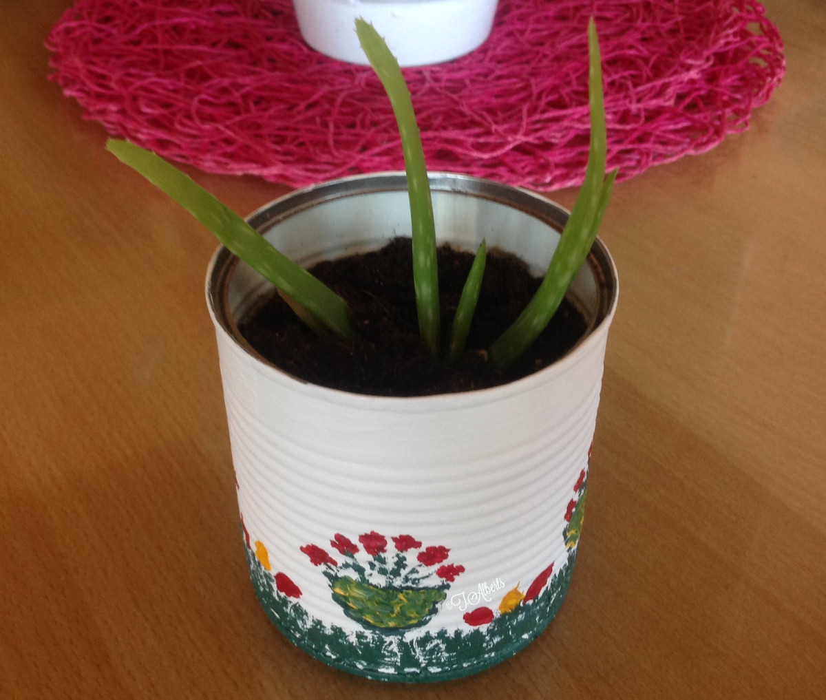 I planted aloe vera plants in my finished recycled food can.