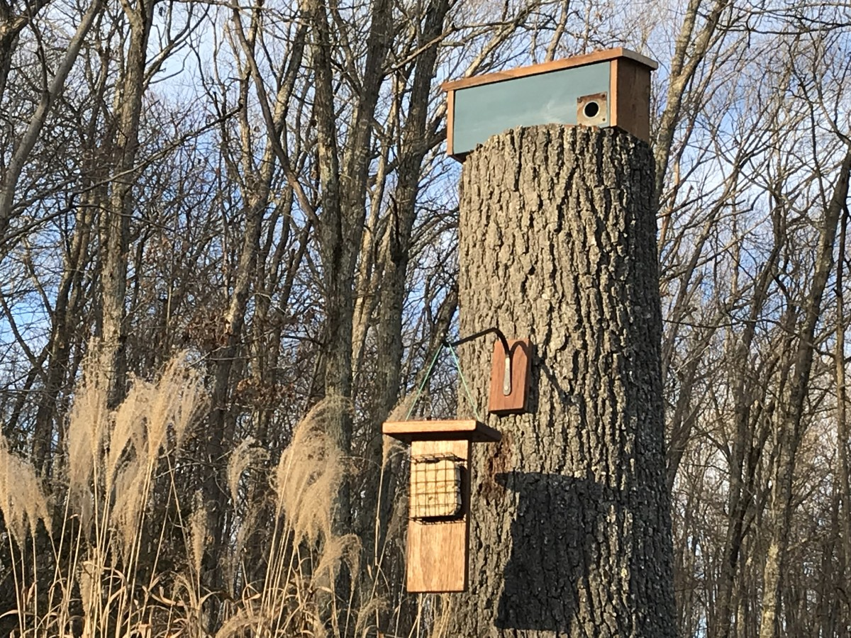 The winter roost box is ready for the birds