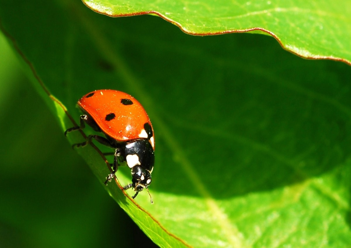 Ladybird walks in from the shadows