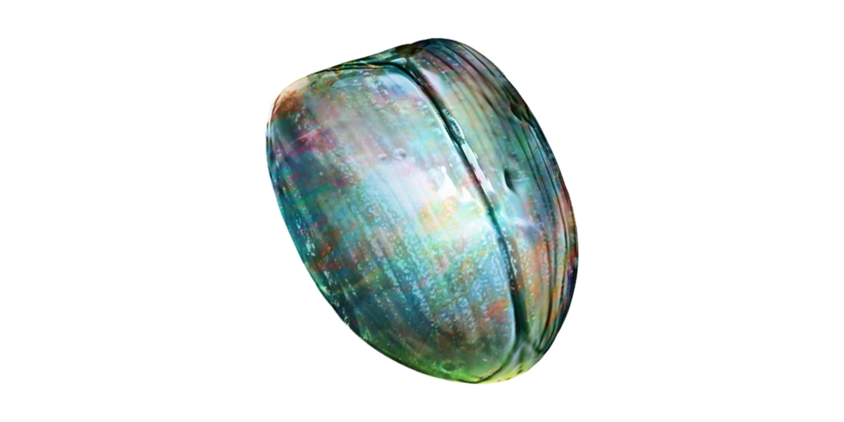 The Opalescent Shell