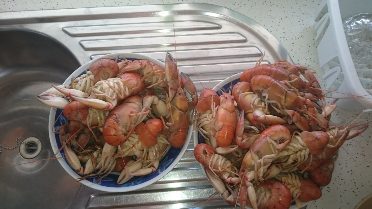 Yabbies are a national favourite of Christmas cuisine.