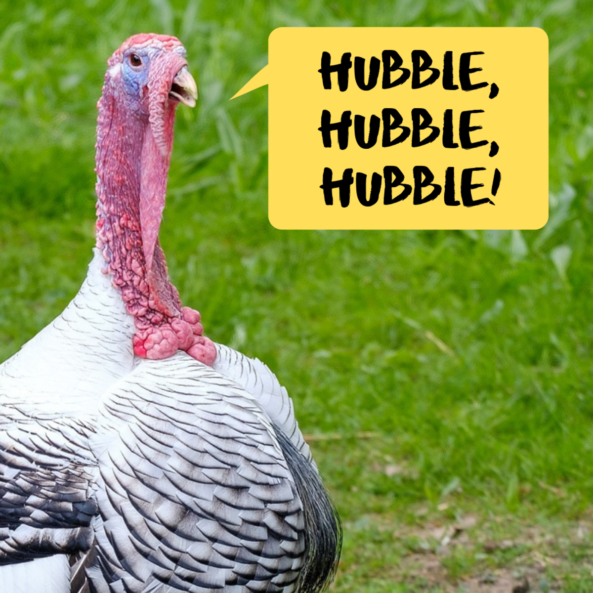Thanksgiving Knock Knock Jokes And Riddles For Kids Holidappy Celebrations
