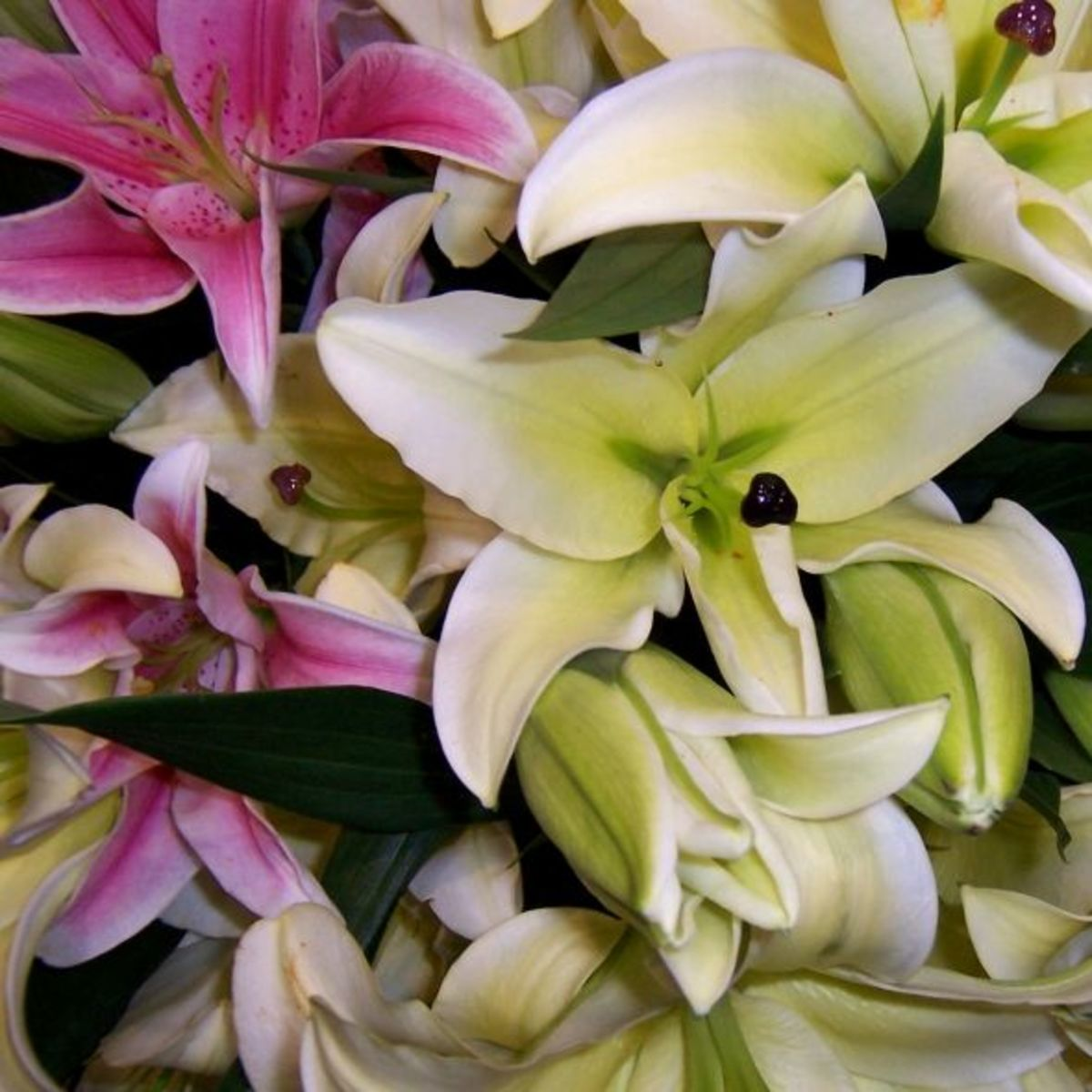 Close-up photo of Stargazer lilies and Casablanca lilies