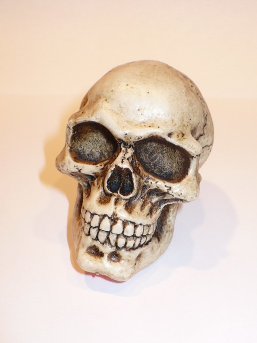 Here's what a skull looks like