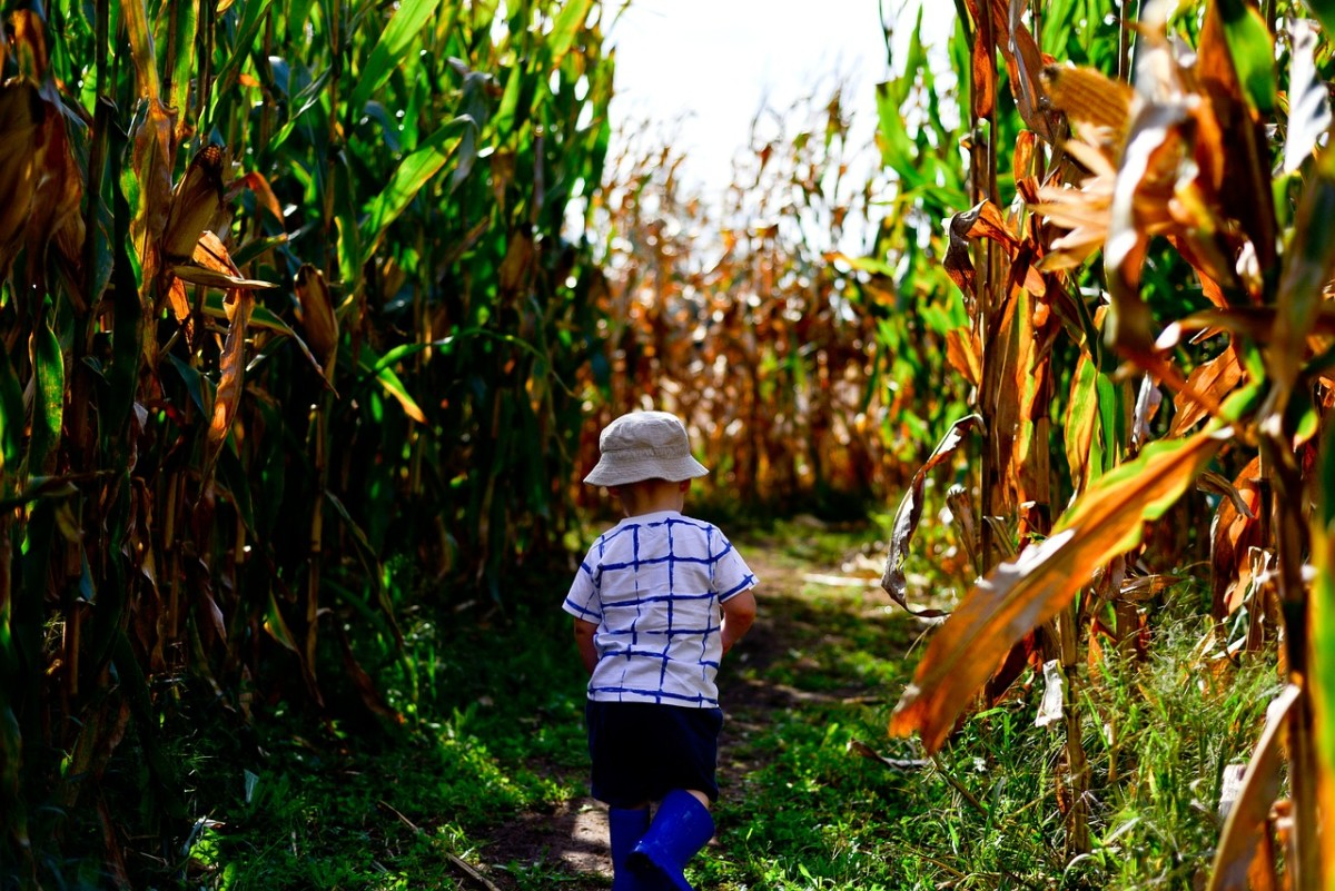 Corn mazes are fun fall activities that are perfect for a birthday!