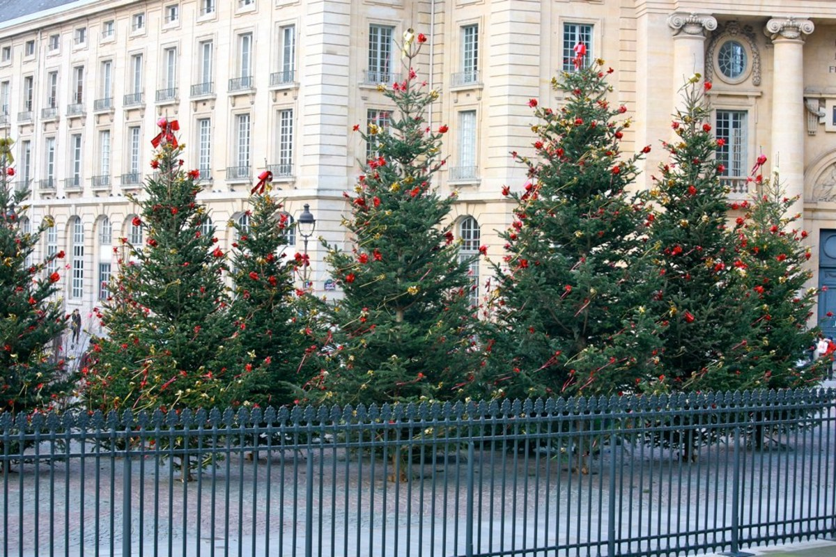 Christmas trees in Paris