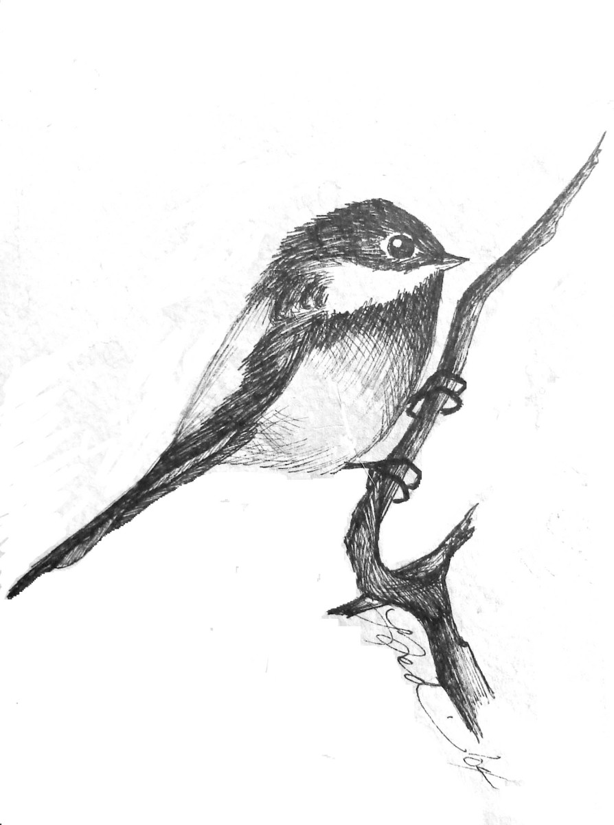 This chickadee drawing is another good Christmas card project.