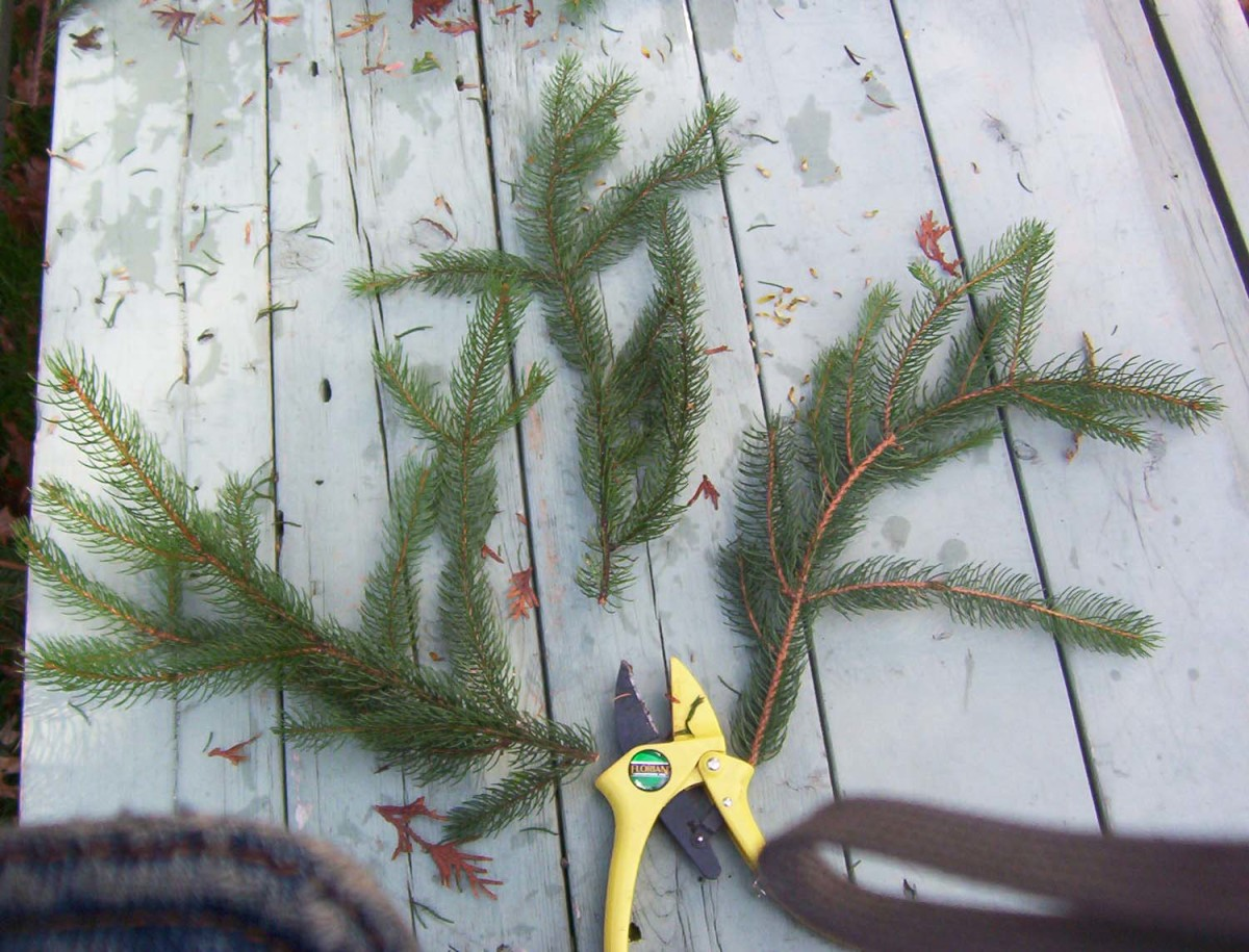 Cut the evergreen branches into smaller pieces.