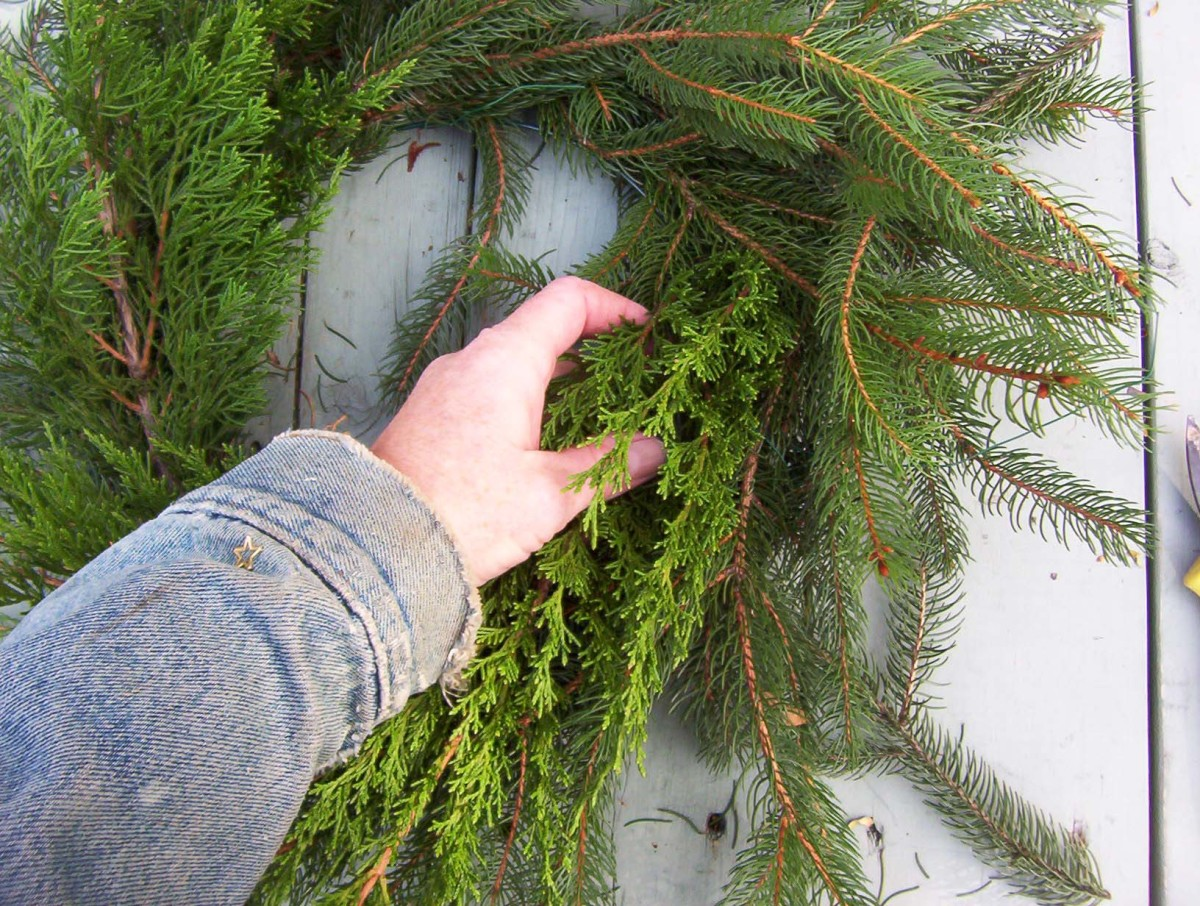 Add other types of evergreen to the wreath.