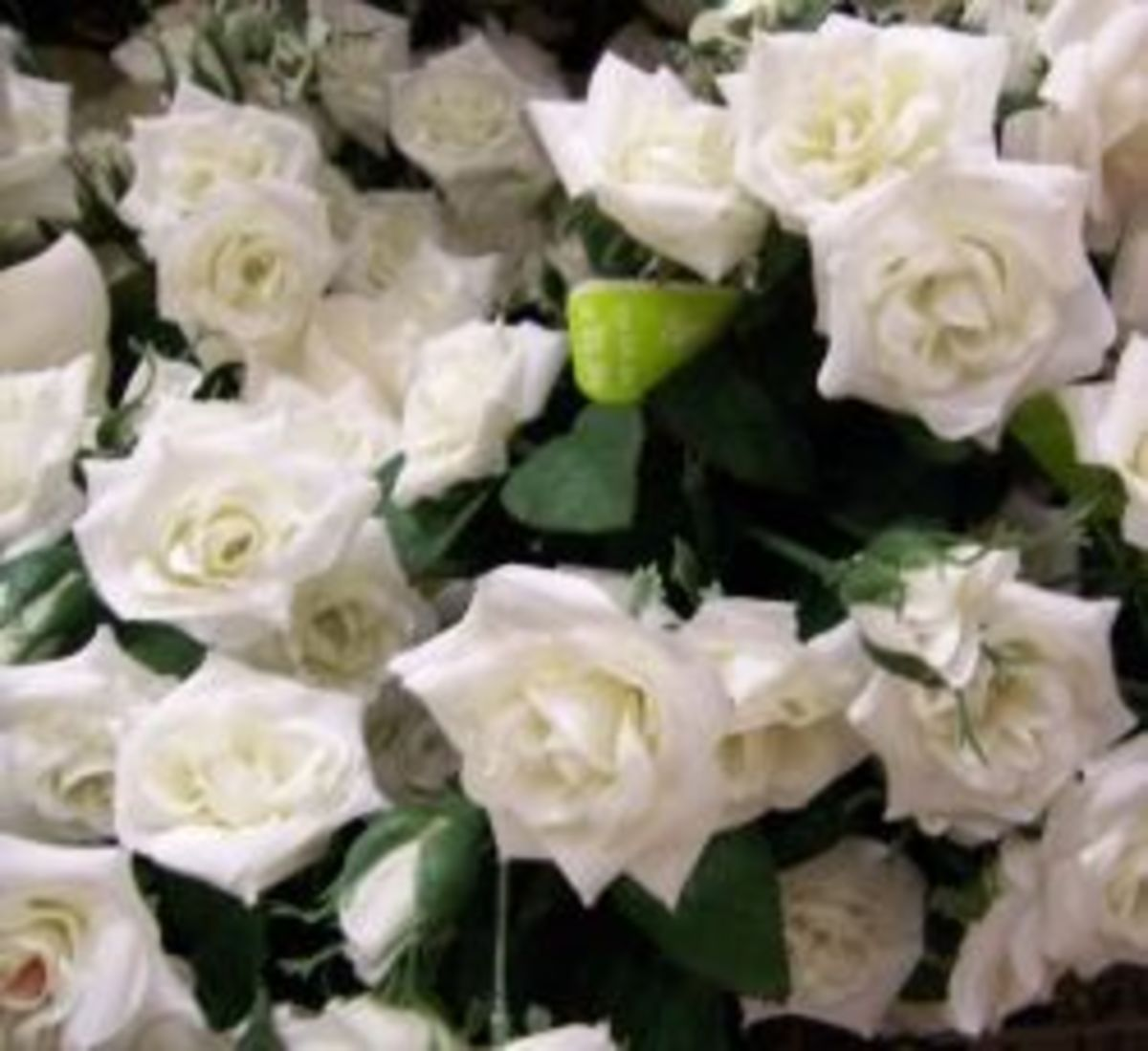 Artificial white rosebuds that come in a bush style
