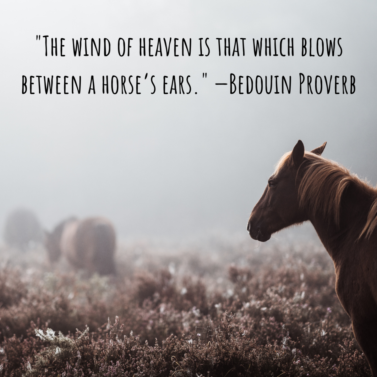 """The wind of heaven is that which blows between a horse's ears."" —Bedouin Proverb"