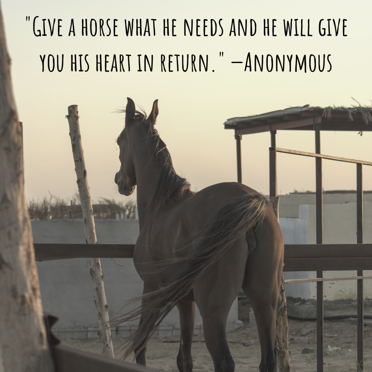"""Give a horse what he needs and he will give you his heart in return."" —Anonymous"