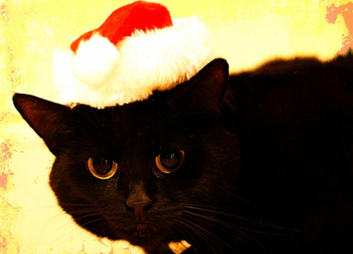the-animals-of-christmas