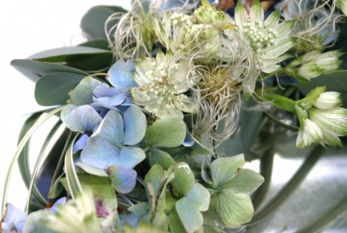 Blue Hydrangea and White Astrantia Brides Bouquet: Soft as the first day of summer, this is mainly made of two contrasting flower choices with graceful Bear's grass. Perfect for semi-formal or outdoor weddings.