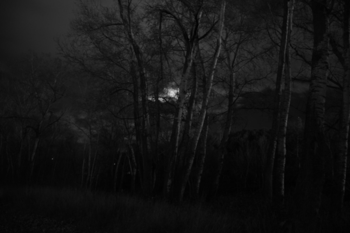 What is lurking around in the dark, dark woods?