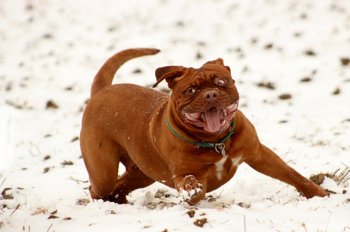 Laugh at the Snow!
