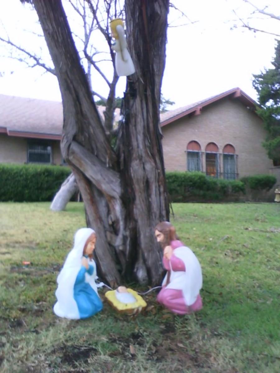 Same set around a tree.