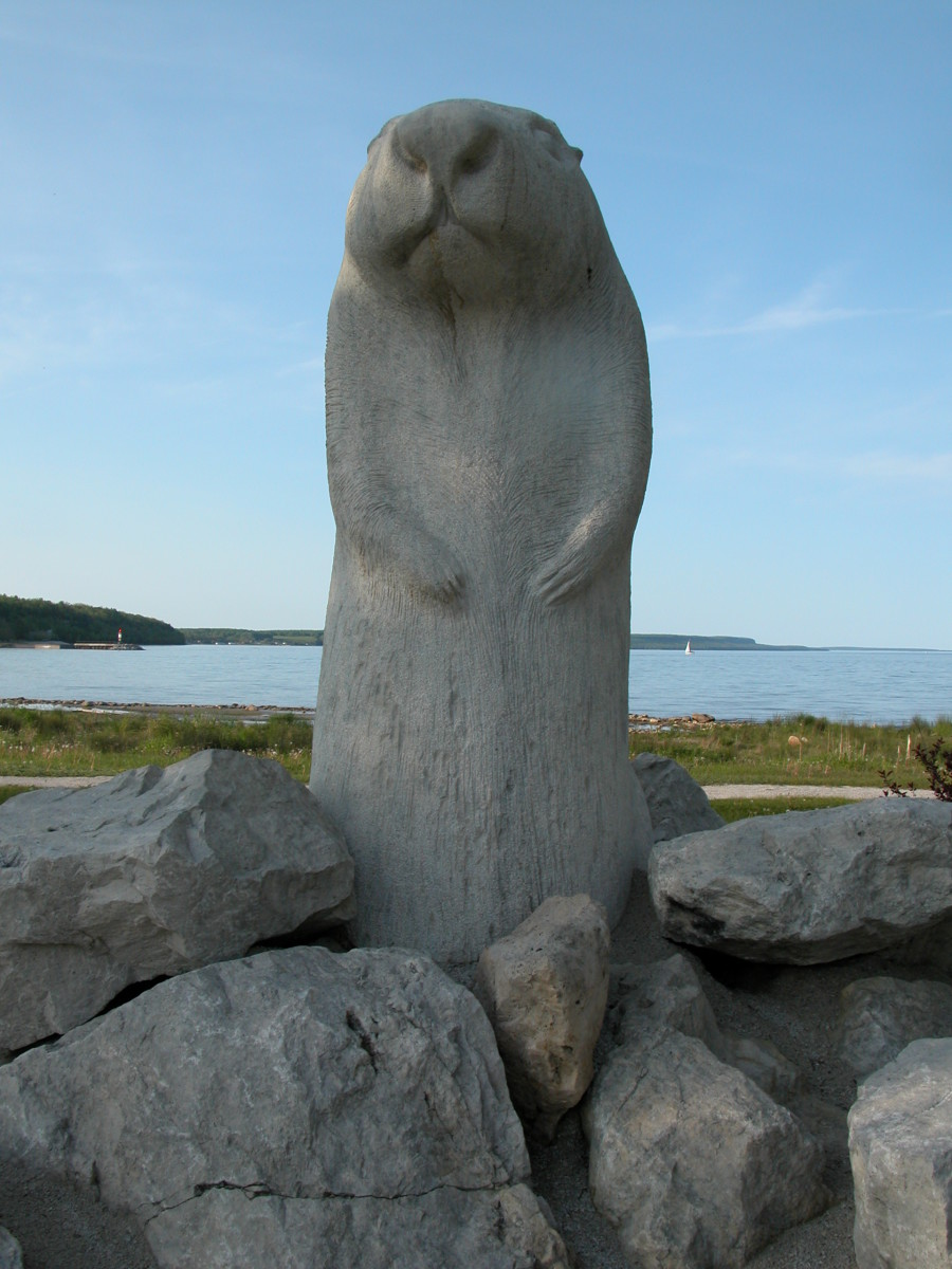 Groundhog Day has become so popular across North America that there are even statues of famous groundhogs. This isn't Punxsutawney Phil, this is Wiarton Willie, from Wiarton, Ontario, Canada.