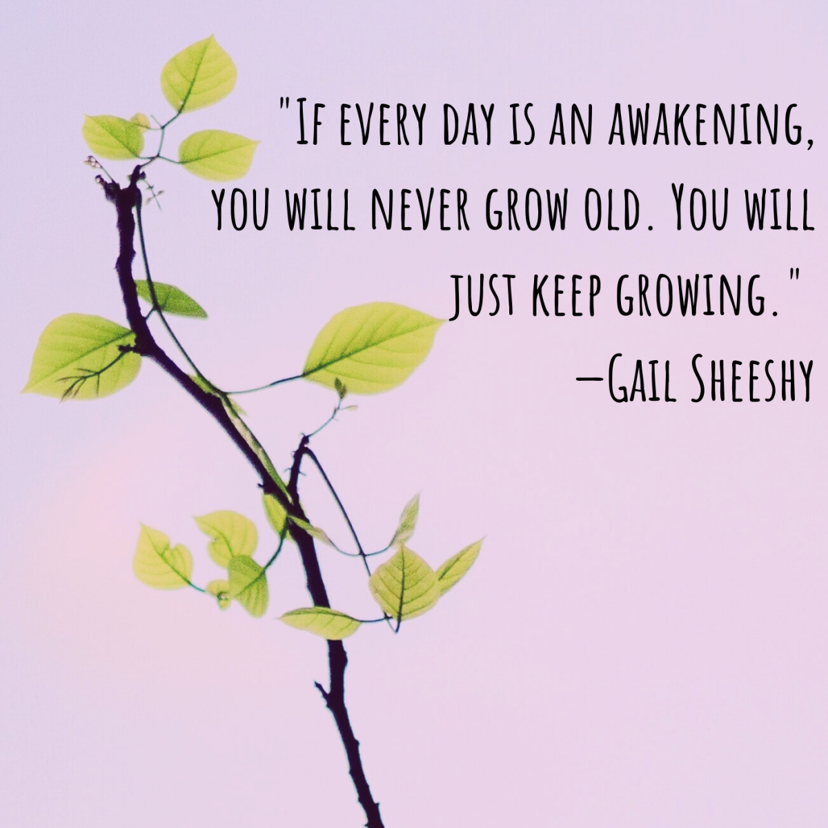 """If every day is an awakening, you will never grow old. You will just keep growing."" —Gail Sheeshy"