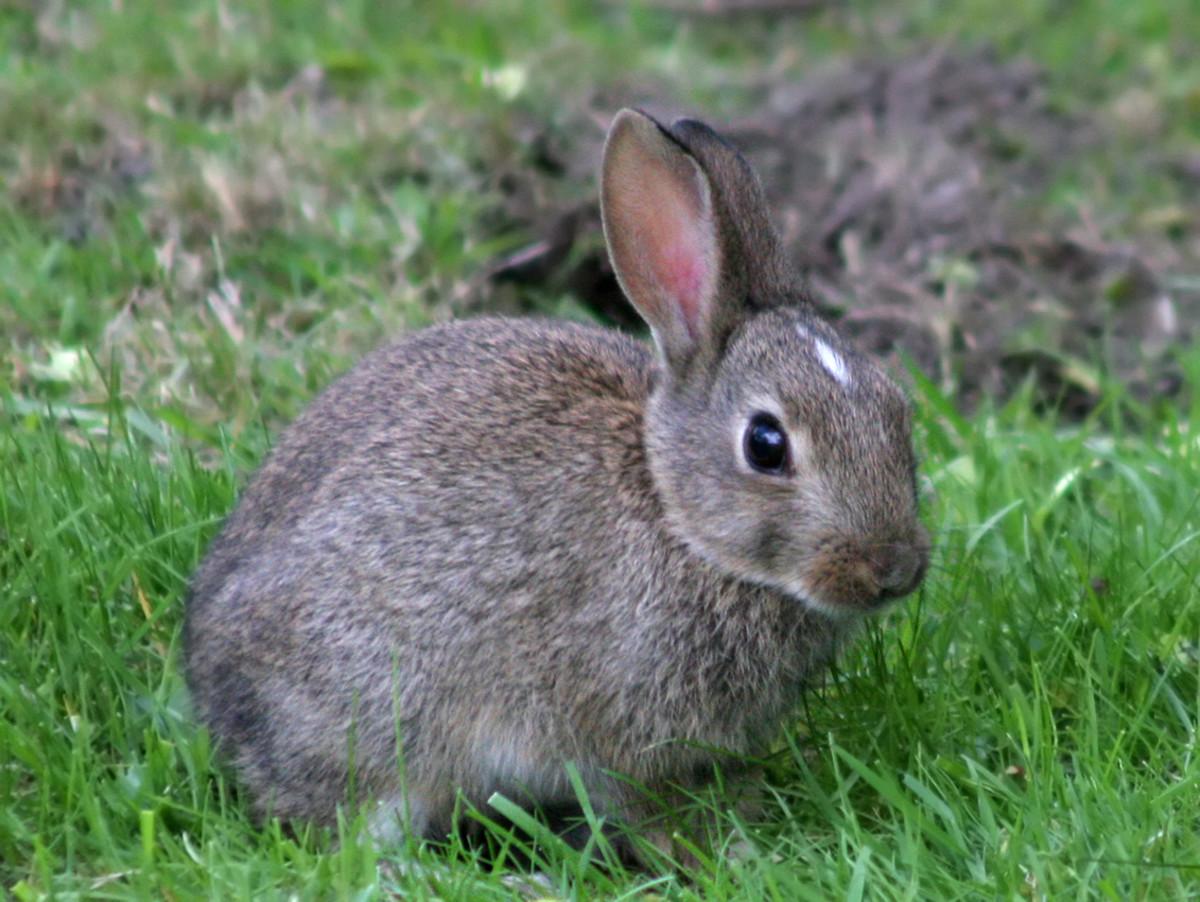 Rabbits always return favors.