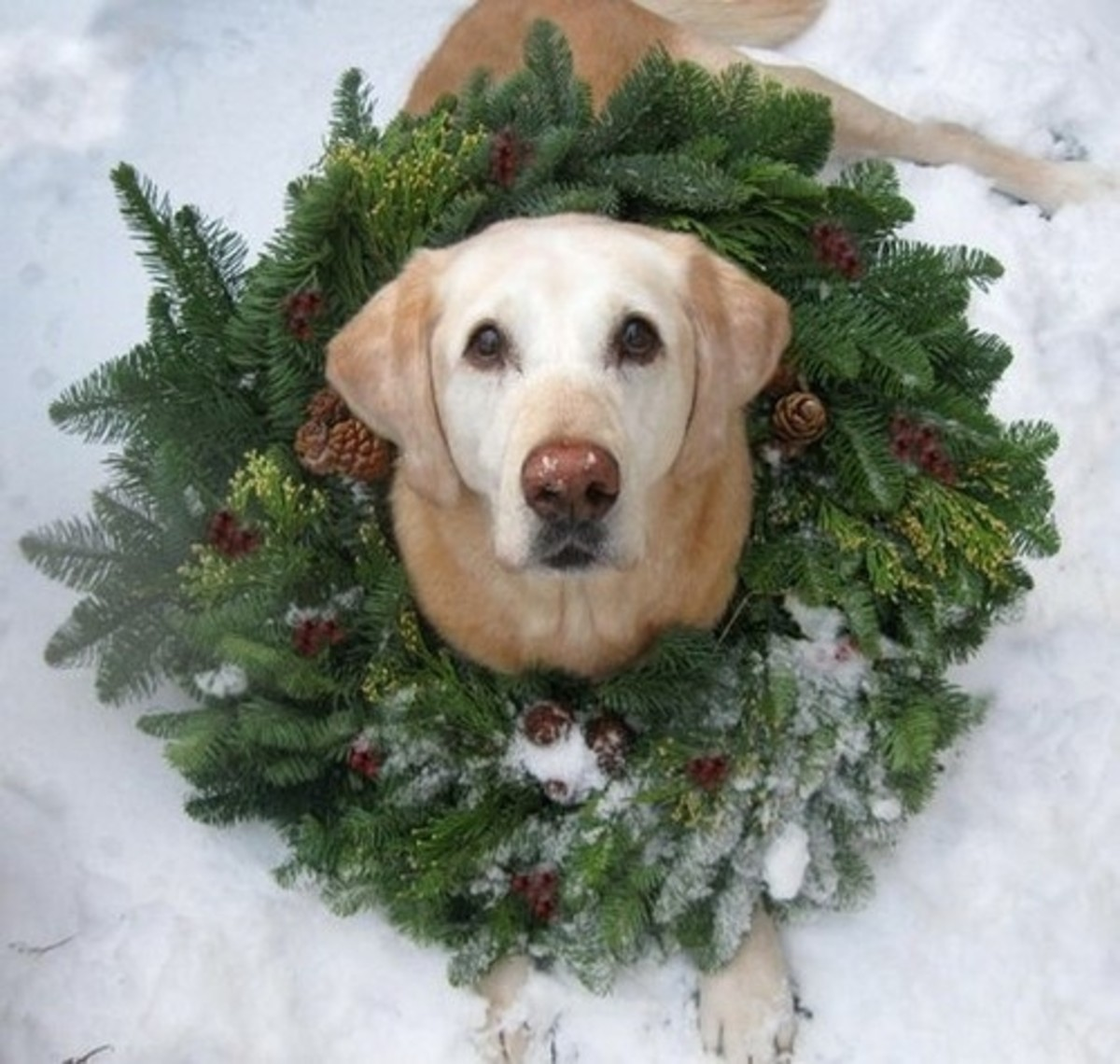 Those who consider their pets to be a part of their family can include them on their holiday cards too.