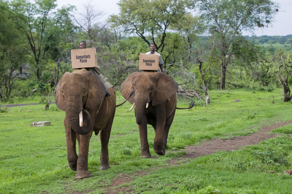 OCC shoeboxes delivered by elephant in Zimbabwe.