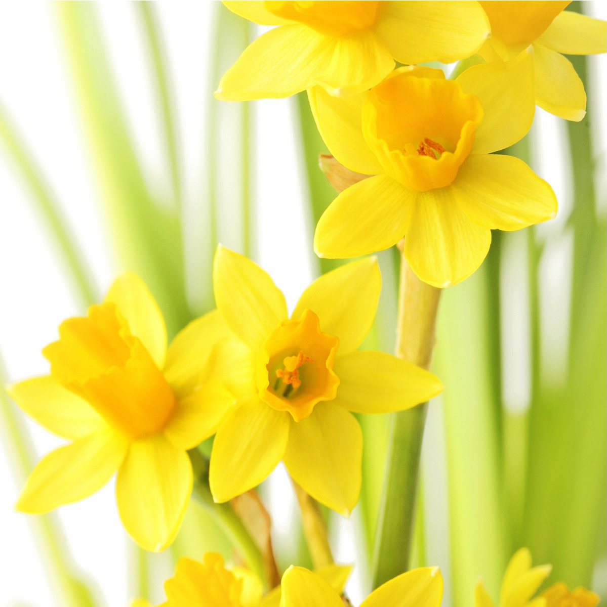 Spring-blooming flowers remind us of the eternal renewal delivered to us by His sacrifice.