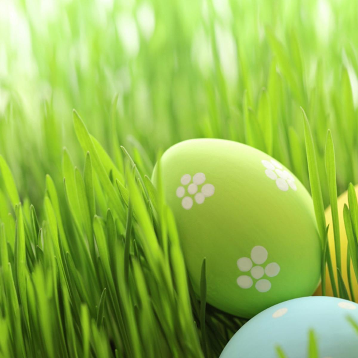 Wait a minute . . . bunnies don't lay eggs!