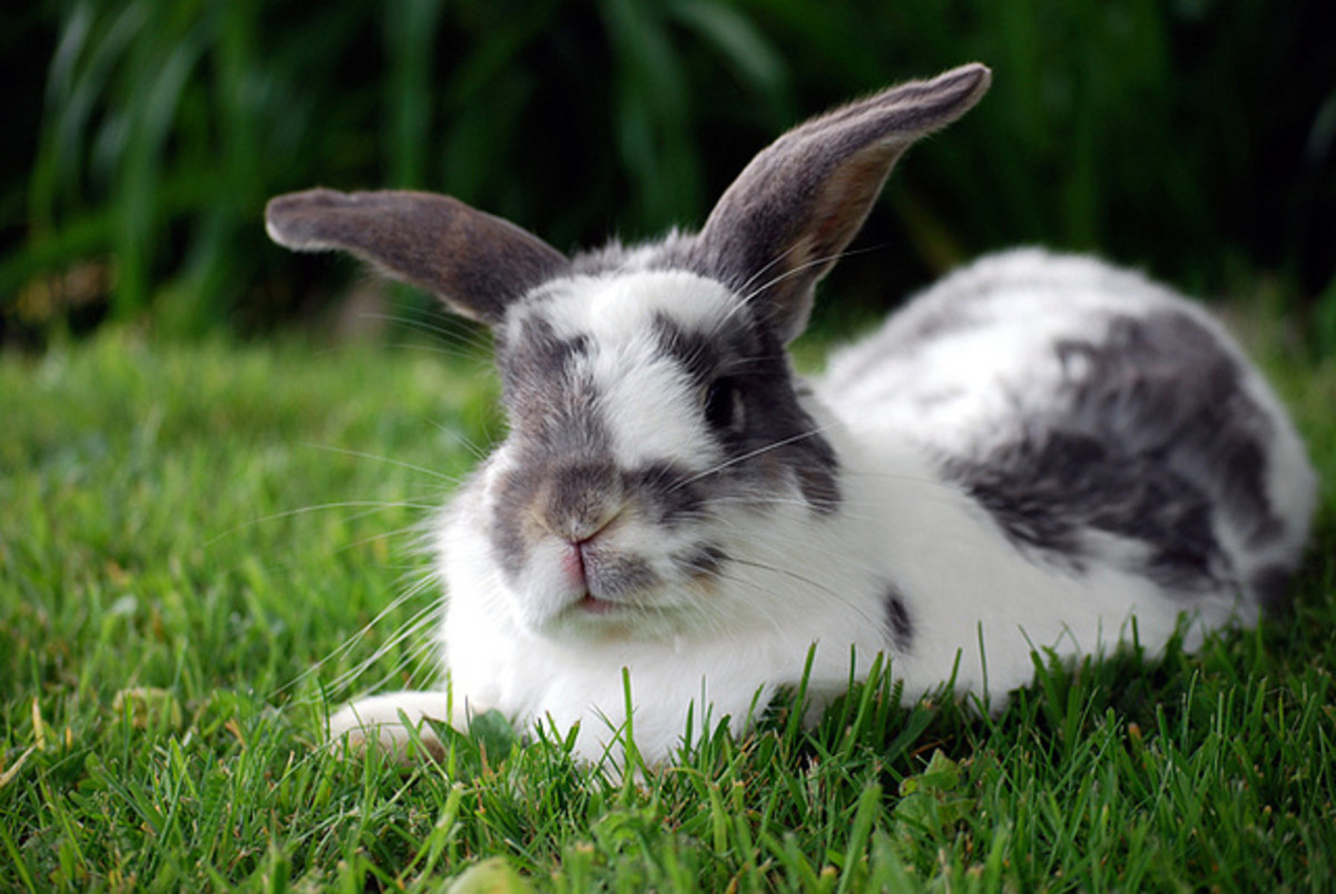 Rabbits are adorable, but they are living animals who deserve the best care. Research is required to make a good pet owner.