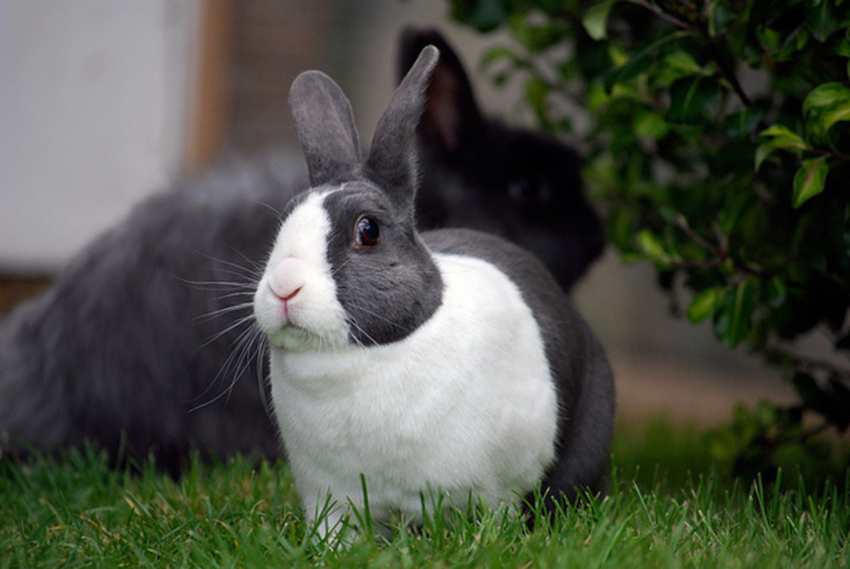 Bunnies need lots of space to roam and don't make good apartment pets because they need to be able to exercise.