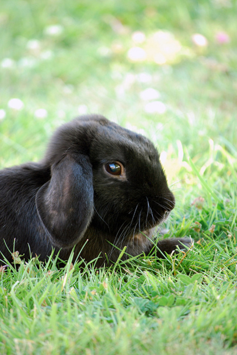 Rabbits are happiest when they have room to move around in their environment.