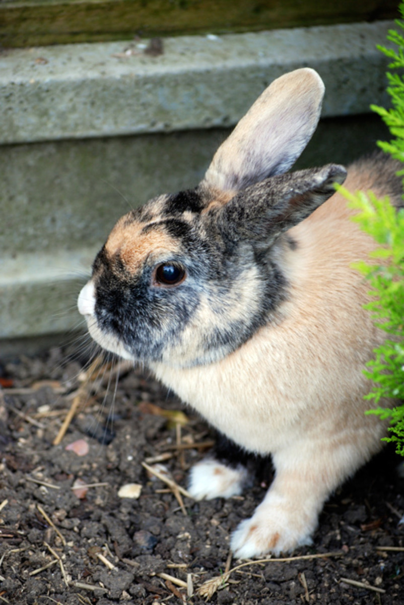 Rabbits don't do well with young children, who may not understand how fragile they are.