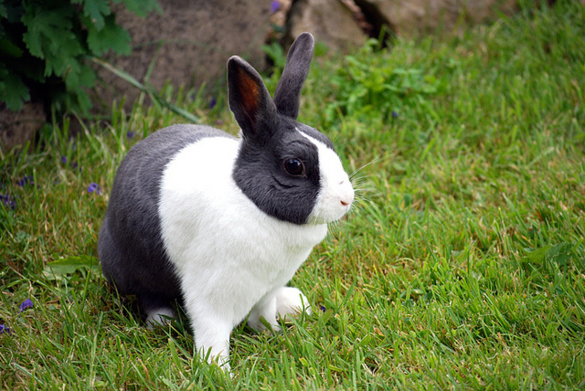 Remember that rabbits require care and are personalities just like other animals!