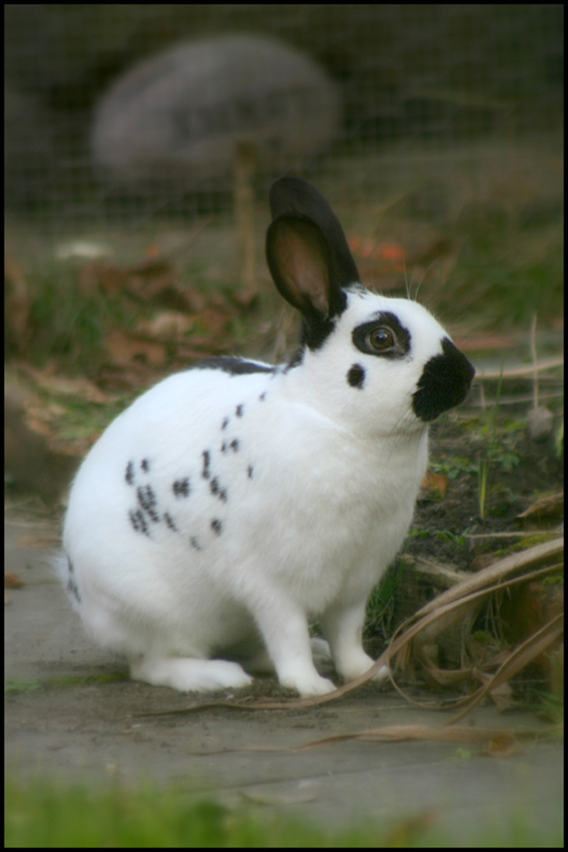 Rabbits are adorable and can make excellent pets, but their care may be complicated and owners need to do their research before purchasing an animal.