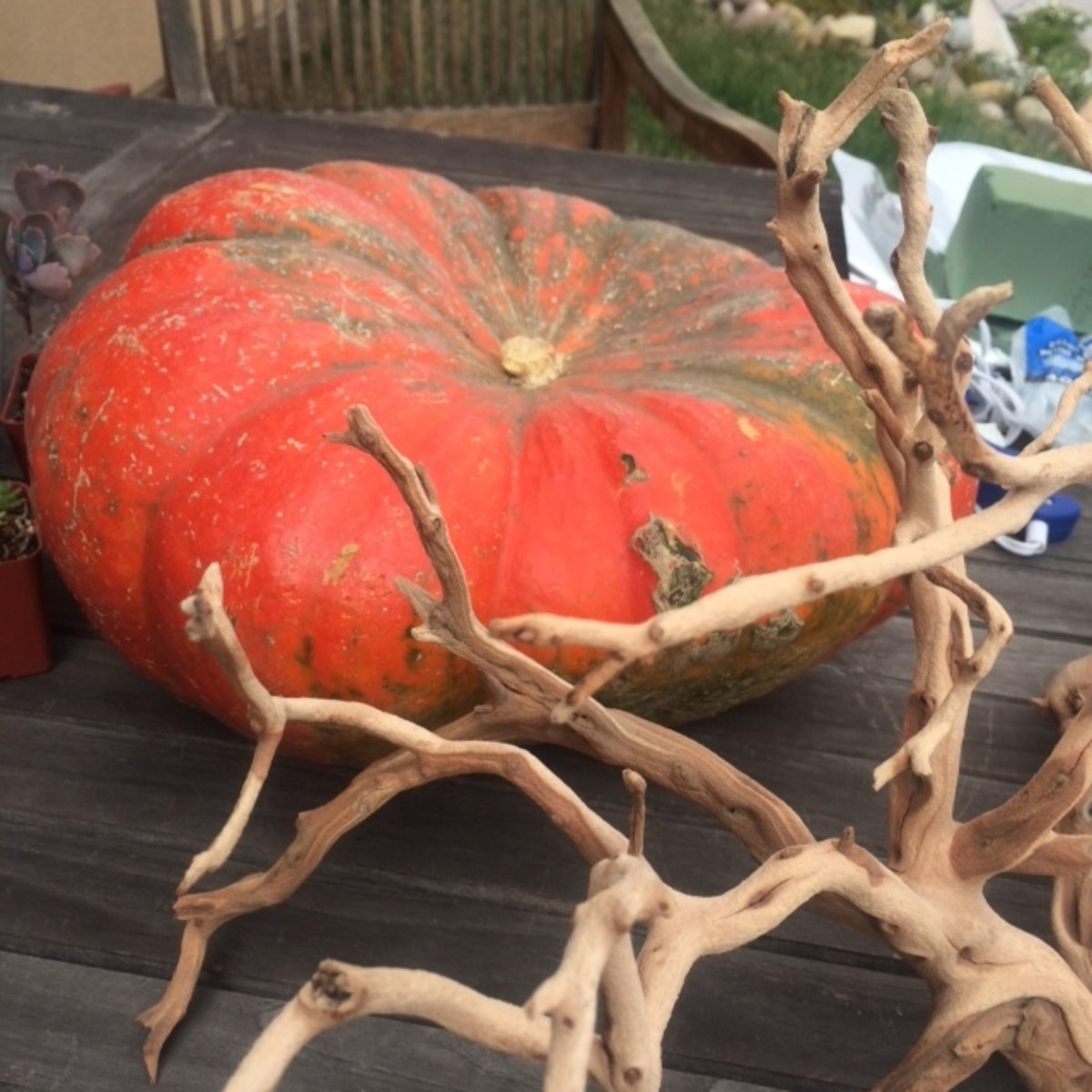 The star of the arrangement, a pumpkin and a piece of driftwood.